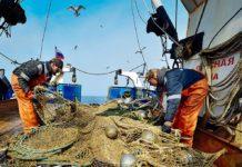 120 тысяч тонн минтая, трески и сельди добыл флот Сахалинской области