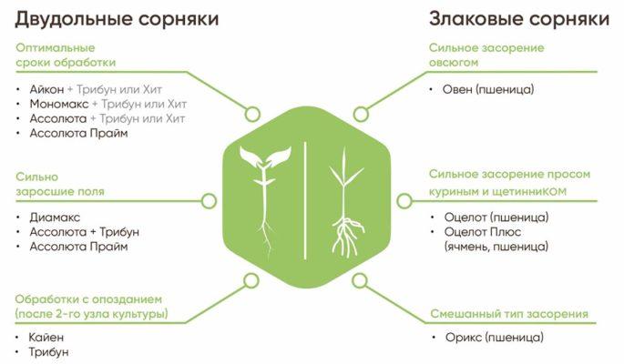Борьба с двудольной сорной растительностью