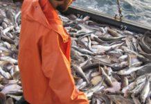 Дальневосточные рыбаки могут потерять миллиарды из-за решений Росрыболовства
