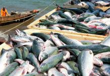 К 18 марта российские рыбаки добыли около 1,16 млн тонн – на 8% больше уровня 2019 года