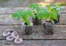 Как использовать торфяные таблетки для посадки рассады