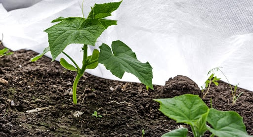 Как выбрать укрывной материал для растений