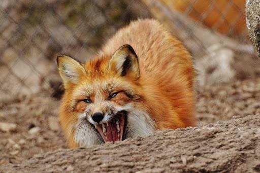 Карантин побешенству животных ввели вдеревне вЧехове