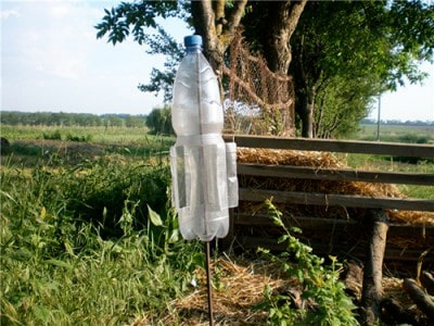 Кроты в огороде: как вывести с помощью ловушек и других средств