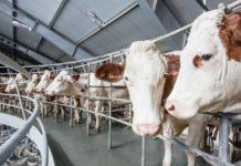 Молочная продуктивность коров в хозяйствах Подмосковья выросла на 4,5%
