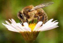 На Алтае пчеловодов будут оповещать об обработке полей через смартфоны