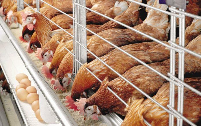Россельхознадзор: высокопатогенный птичий грипп приближается к границам России