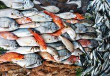 Россия продлила запрет на ввоз рыб и рептилий из Китая