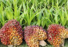 Россия в 2020 году продолжает наращивать импорт пальмового масла