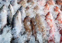 Рыба может подорожать в России из-за падения рубля