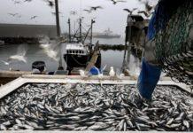 Сахалинская область: рыбаки добыли более 102 тысяч тонн минтая, сельди и трески
