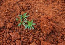 Сколько CO2может удержать всебе почва: вред сельского хозяйства