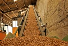 Тамбовские учёные создали технологию переработки биомассы в топливо