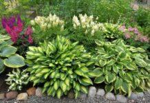 Теневыносливые садовые растения