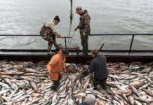 Цены на норвежский лосось упали из-за коронавируса