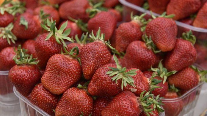 В Крыму урожай клубники увеличится на 15%