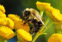В Курской области пчёлам выдают паспорта и отправляют на медосмотры