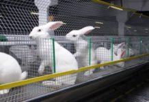 В Липецкой области развивается один из крупнейших в Черноземье кролиководческий комплекс
