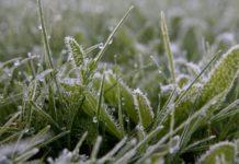 В МЧС Крыма прогнозируют гибель сельхозкультур из-за заморозков