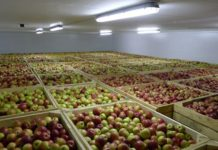 В Северной Осетии открылось фруктохранилище на 2,5 тыс. тонн