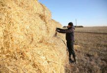 ВВолгоградской области молодые специалисты АПКполучают поддержку государства