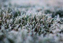 В Ростовской области вероятна гибель урожая из-за заморозков