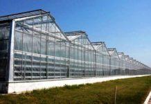 Минcельхоз Молдовы: владельцы теплиц больше всего страдают от COVID-19
