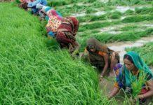 Аграрии Индии потеряли $1 млрд из-за остановки международной торговли
