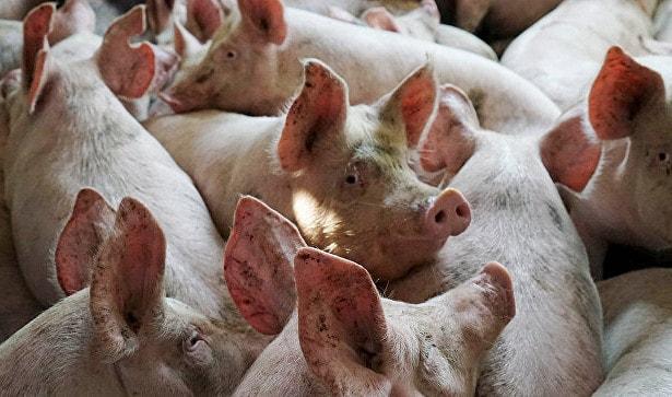 Цены на свинину в Китае продолжают падать по мере роста производства