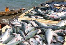 Из-за коронавируса Вьетнам сократил экспорт морепродуктов на 11%