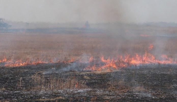 Красноярские власти лишат поддержки фермеров за палы на полях