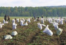 Мигрантов на российских полях могут заменить студентами и заключенными