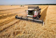 Минсельхоз РФ не намерен отказываться от квоты на экспорт зерна