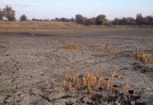 На Украине ожидают снижение урожая из-за пандемии и засухи