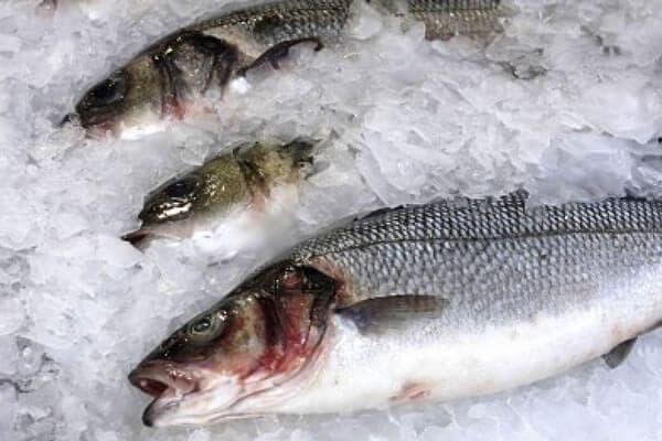Оптовые цены на мороженную рыбу продолжают снижаться