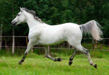 Породы лошадей которые разводят в нашем крае