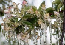 Поздние заморозки сильно ударили по фруктам и овощам Италии