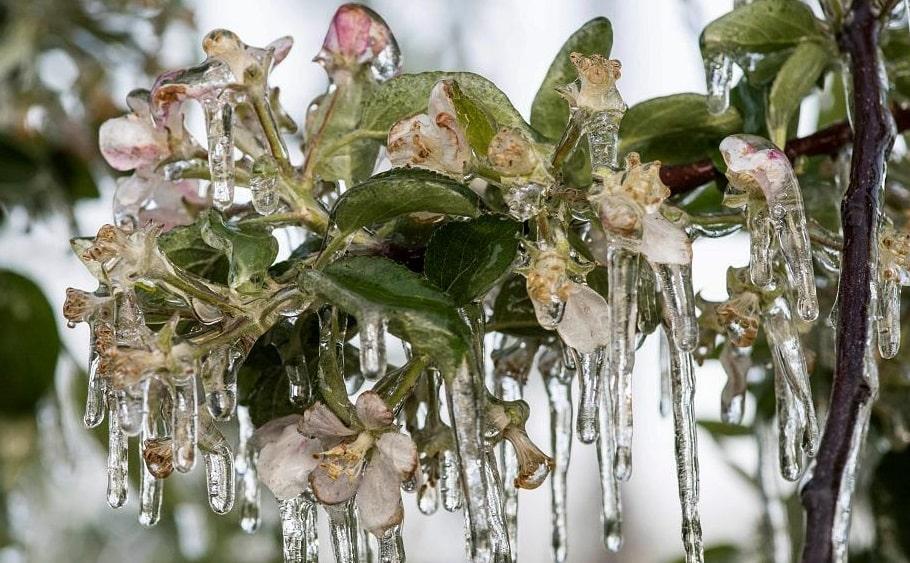 Photo of Поздние заморозки сильно ударили по фруктам и овощам Италии