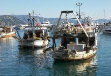 Приморский край: рыбаки добывают до 800 тонн кальмара в сутки