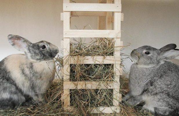 Рацион для кроликов