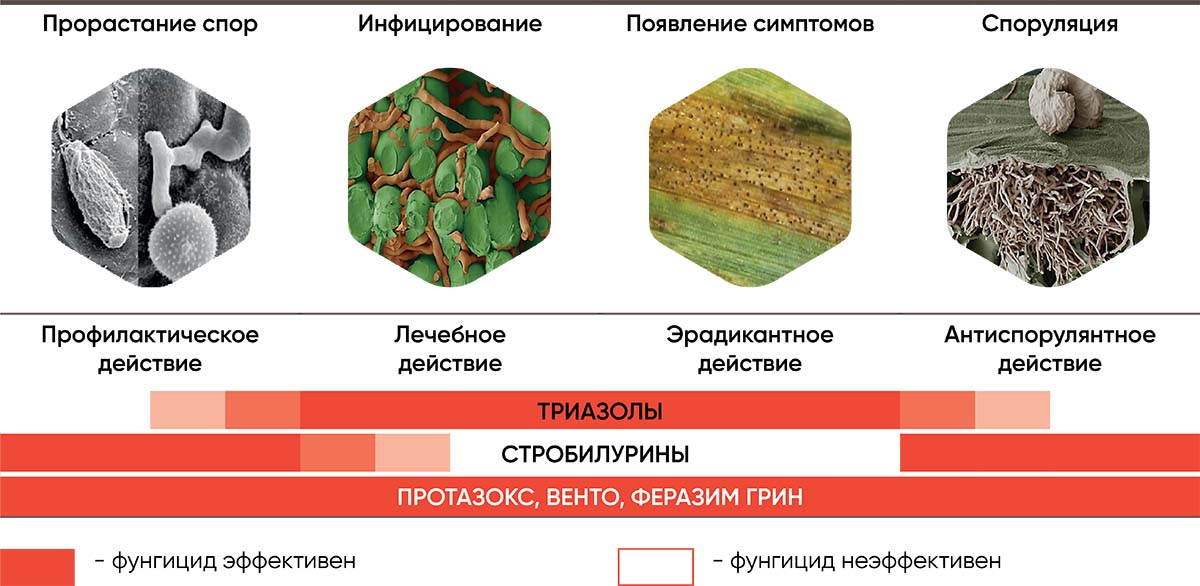 Рис. 2 Эффективность д.в. и препаратов в зависимости от стадии развития инфекции копия