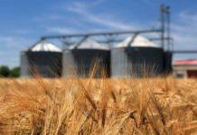 Россия приостанавливает экспорт зерновых до 1 июля