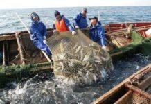 Российские рыбаки с начала года увеличили улов на 6,7%