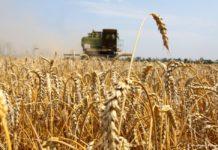 Рост выпуска продукции АПК в РФ к 2030 г превысит 25%, ее экспорт - $45 млрд - Минсельхоз