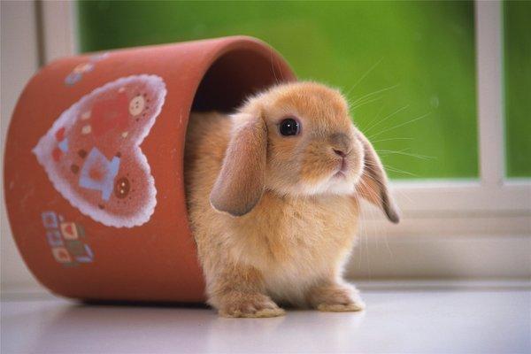Содержание декоративных кроликов