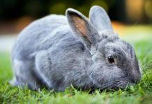 Убой кроликов