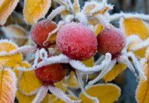 В Кабардино-Балкарии из-за заморозков повреждены посевы и цветущие деревья