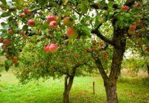 В Тамбовской области началась закладка новых садов