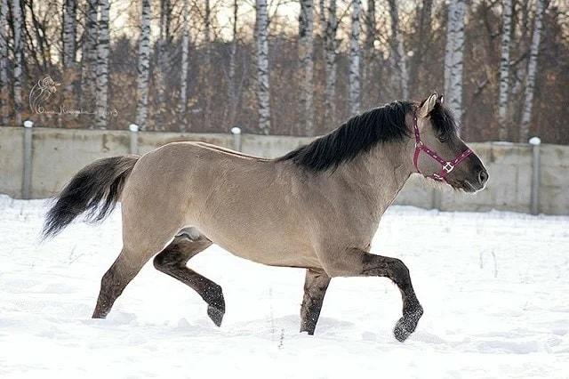 Photo of Вятская порода лошадей
