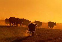 Владимирские аграрии получат 1,5 млрд рублей господдержки